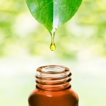 Herbal essence. Alternative healthy medicine. Skin care. Essential oil or water dropping from fresh leaf to the bottle.